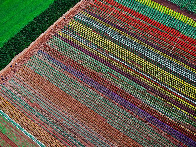 Picture of the Day: The Table Cape Tulip Farm fromAbove