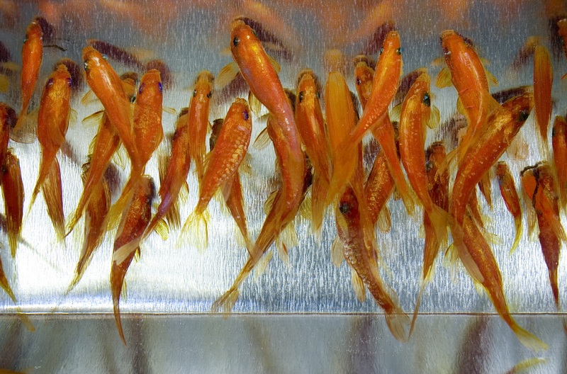 3d fish sculpture paintings layer by layer riusuke fukahori 11 Incredible 3D Sculptural Art Painted Layer by Layer