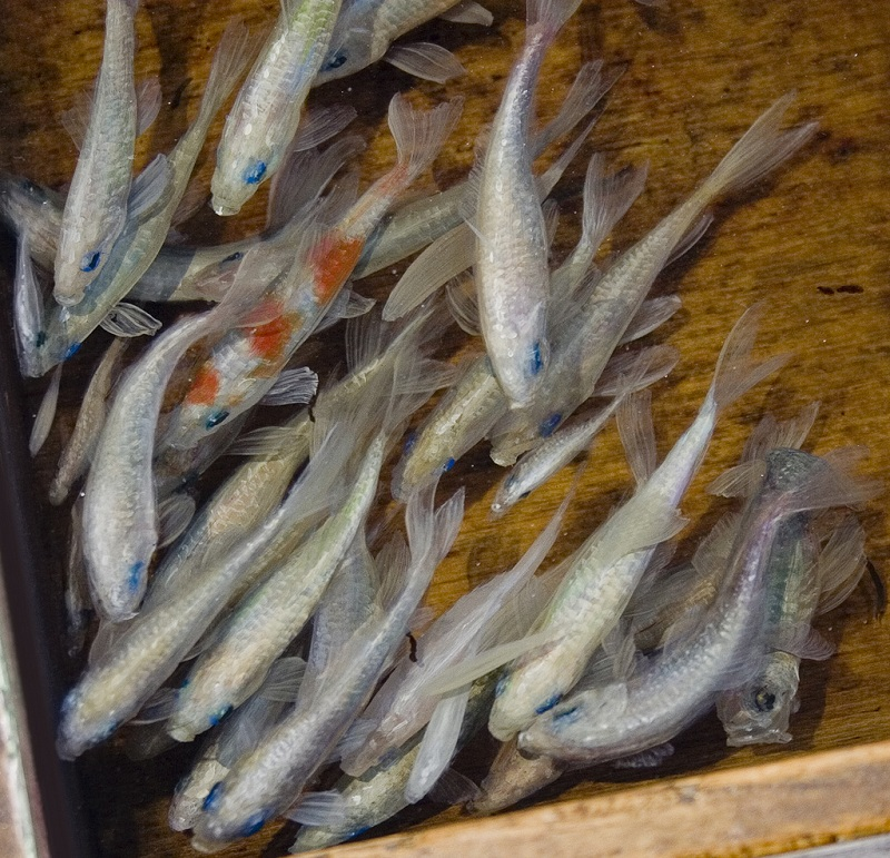 3d fish sculpture paintings layer by layer riusuke fukahori 3 Incredible 3D Sculptural Art Painted Layer by Layer