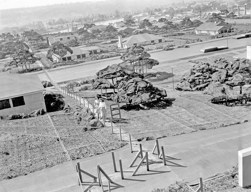boeing plant hidden netting ww2 1 Hiding Air Bases, Factories and Plants in WWII