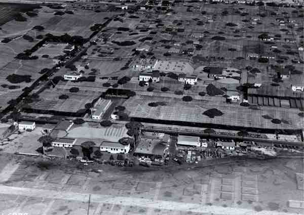 wwii lockheed covered in netting 2 Hiding Air Bases, Factories and Plants in WWII