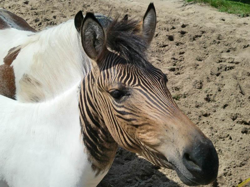 10 Bizarre Hybrid Animals «TwistedSifter