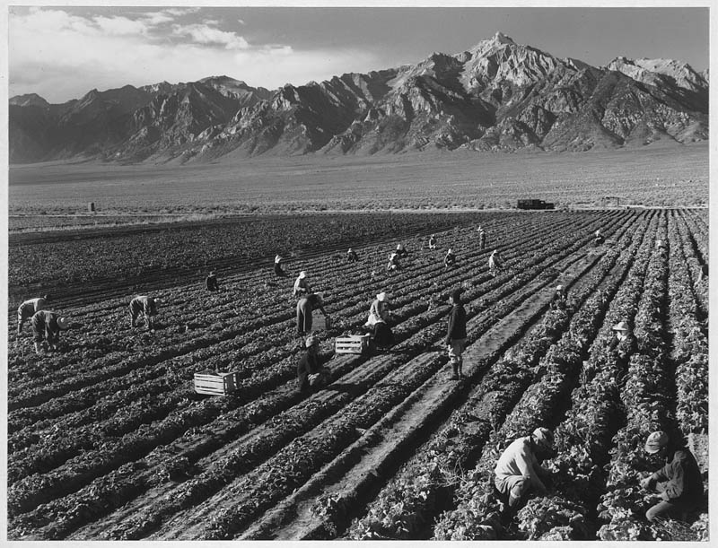 ansel adams life on japanese internment camps wwii manzanar 3 Ansel Adams Captures Life on a Japanese Internment Camp