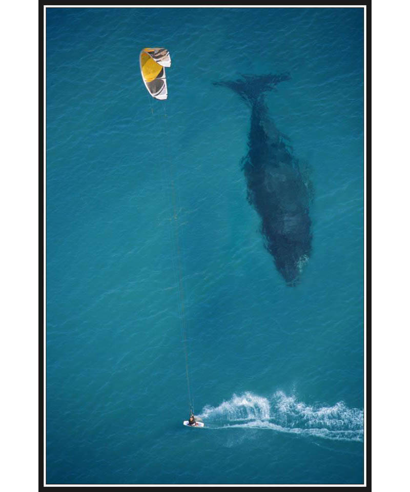 kite surfing with whale below aerial shot from above The Top 75 Pictures of the Day for 2012