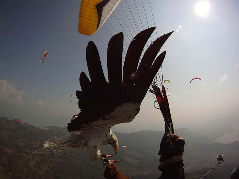 parahawking in nepal scott mason 3 The Ultimate Guide to Parahawking in Nepal