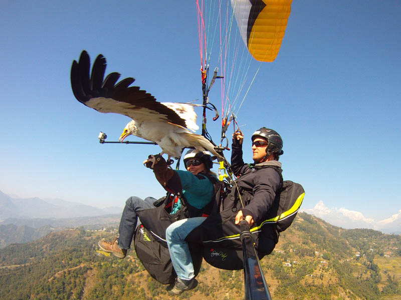 parahawking in nepal scott mason 5 The Ultimate Guide to Parahawking in Nepal
