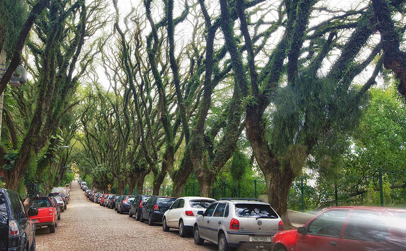 tree covered street porto alegre brazil rue goncalo de carvalho 4 Stunning Street in Porto Alegre, Brazil is Blanketed in Trees