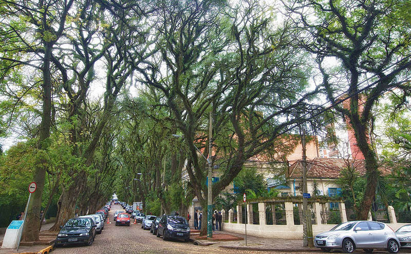 tree covered street porto alegre brazil rue goncalo de carvalho 5 Stunning Street in Porto Alegre, Brazil is Blanketed in Trees