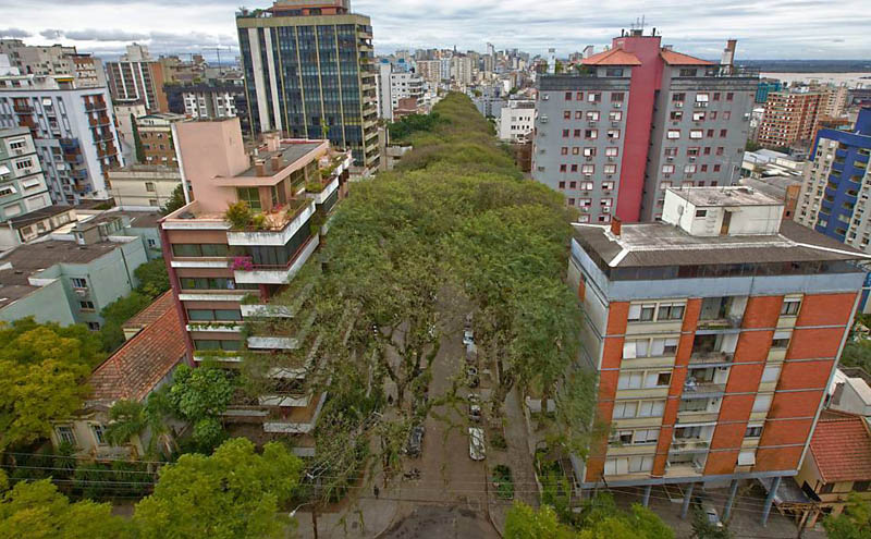 tree covered street porto alegre brazil rue goncalo de carvalho 6 Stunning Street in Porto Alegre, Brazil is Blanketed in Trees