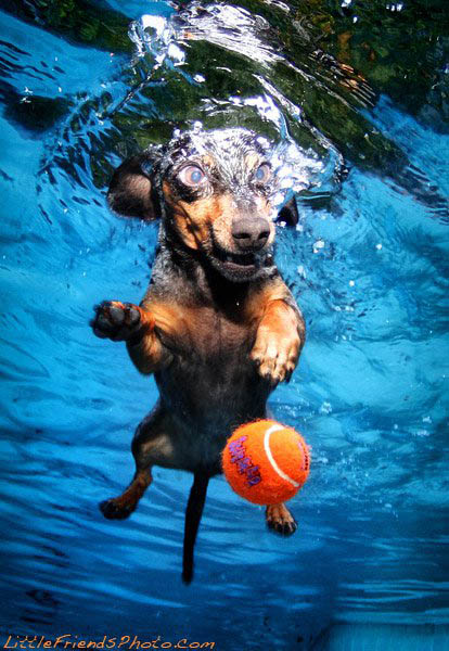 underwater photos of dogs seth casteel 1 12 Underwater Photos of Dogs Fetching Their Ball