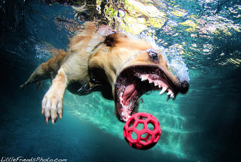 underwater photos of dogs seth casteel 10 12 Underwater Photos of Dogs Fetching Their Ball