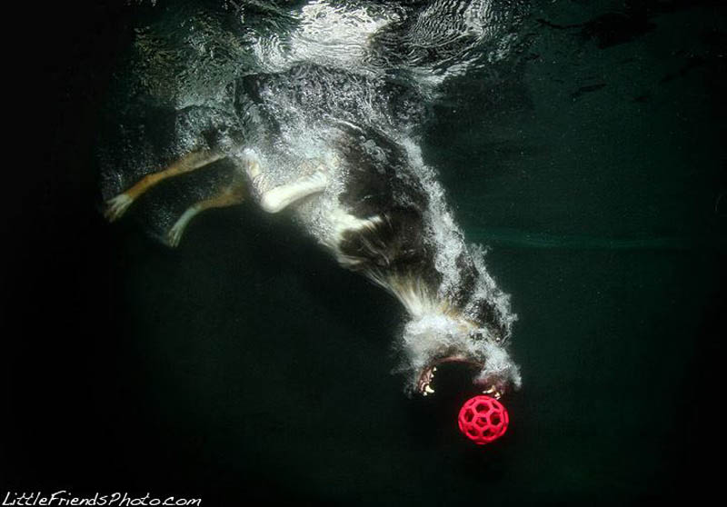 underwater photos of dogs seth casteel 12 12 Underwater Photos of Dogs Fetching Their Ball