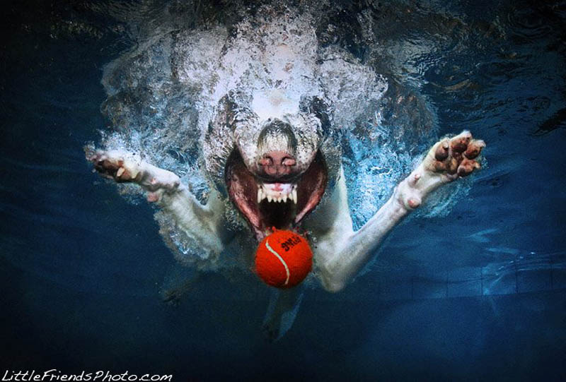underwater photos of dogs seth casteel 2 12 Underwater Photos of Dogs Fetching Their Ball
