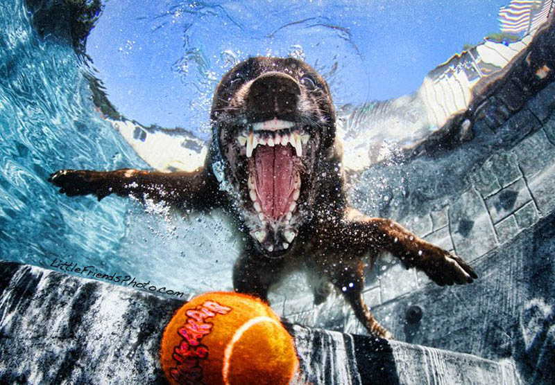underwater photos of dogs seth casteel 3 12 Underwater Photos of Dogs Fetching Their Ball