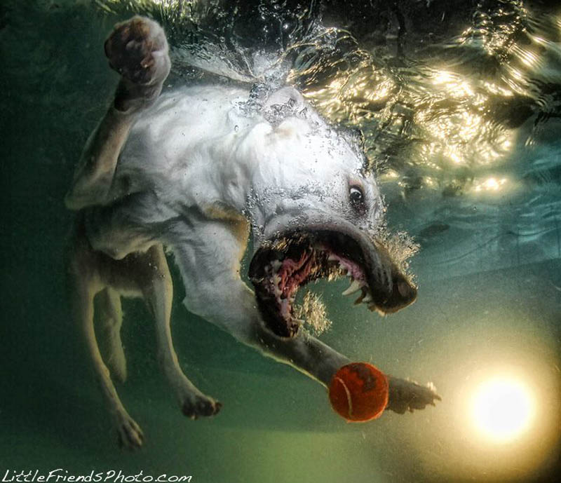 underwater photos of dogs seth casteel 4 12 Underwater Photos of Dogs Fetching Their Ball