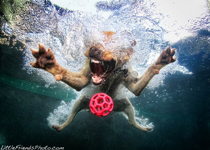 underwater photos of dogs seth casteel 5 12 Underwater Photos of Dogs Fetching Their Ball