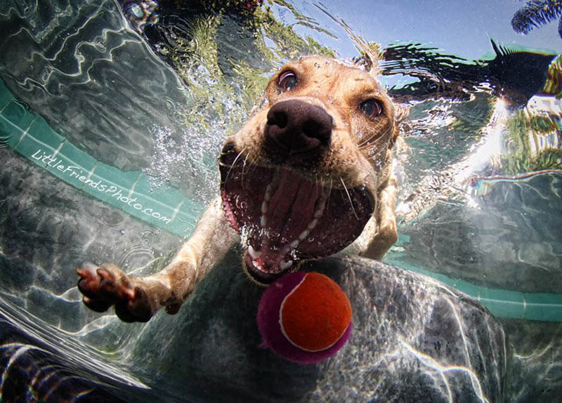 underwater photos of dogs seth casteel 6 12 Underwater Photos of Dogs Fetching Their Ball