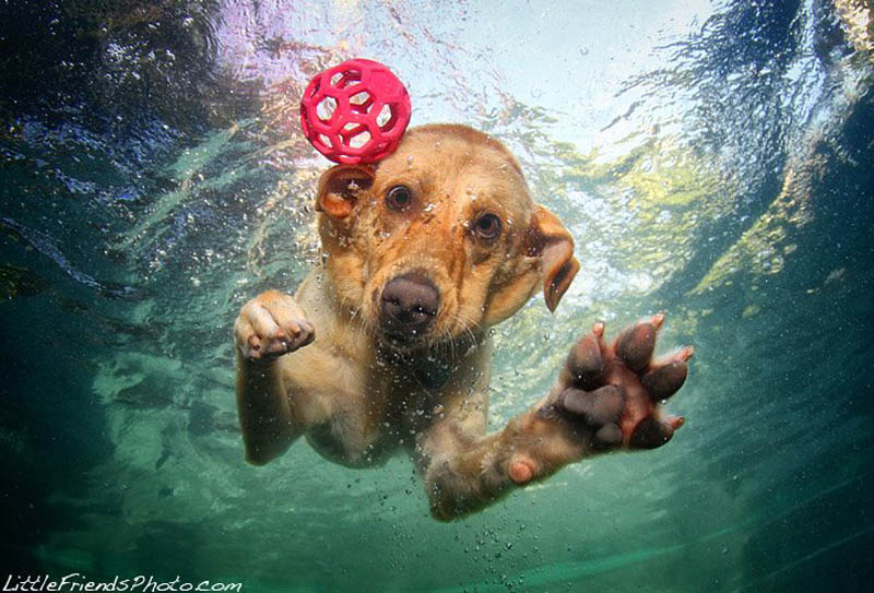 underwater photos of dogs seth casteel 8 12 Underwater Photos of Dogs Fetching Their Ball