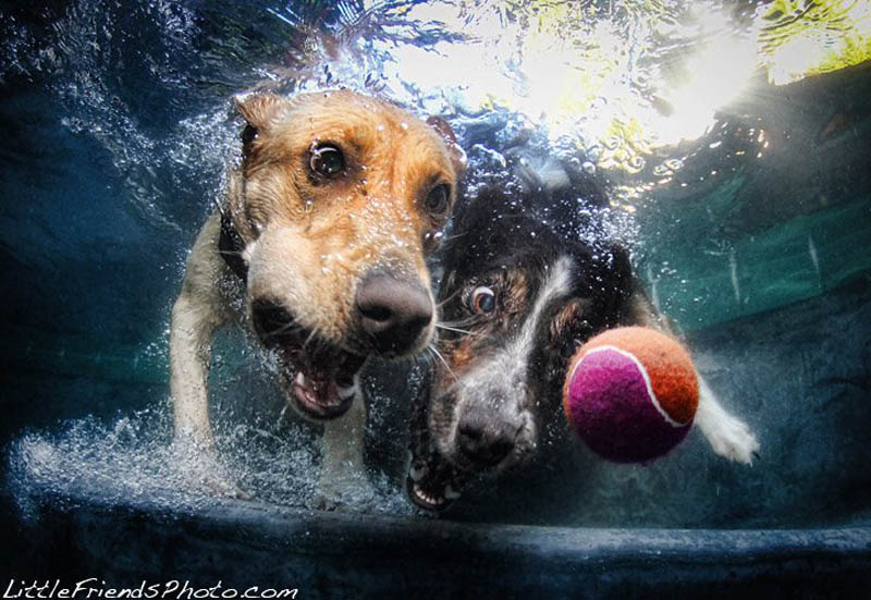 underwater photos of dogs seth casteel 9 12 Underwater Photos of Dogs Fetching Their Ball