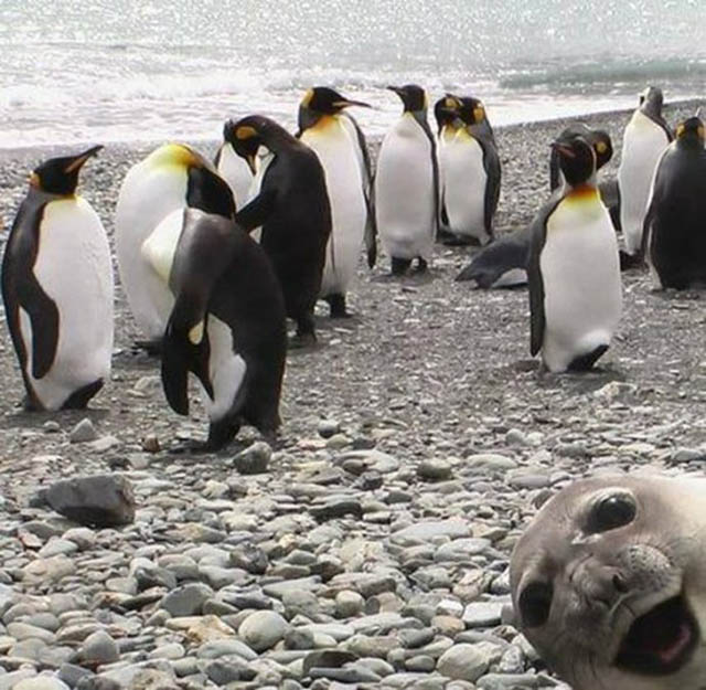 cropped seal photobombing The 15 Greatest Animal Photobombs of All Time
