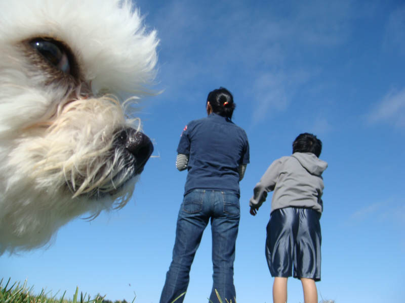 dog photobomb animal photobombs The 15 Greatest Animal Photobombs of All Time