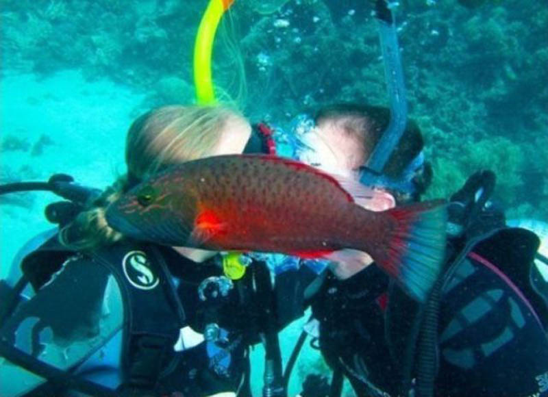 fish photobombs kissing couple animal photobomb The 15 Greatest Animal Photobombs of All Time