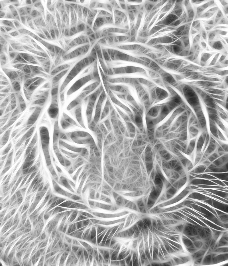 fractal tiger black and white Picture of the Day: The Fractal Tiger