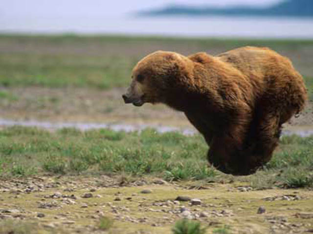 hover bear flying bear The 25 Funniest Hover Animals Ever