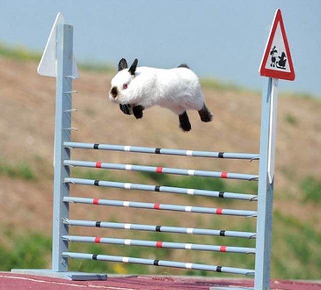 hover bunny The 25 Funniest Hover Animals Ever