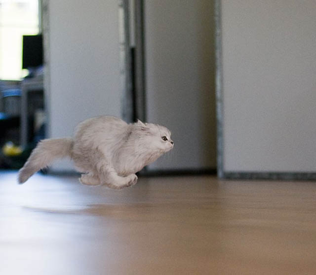 hover cat flying cat 1 The 25 Funniest Hover Animals Ever
