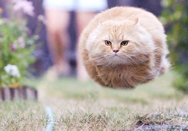 hover cat flying cat 2 The 25 Funniest Hover Animals Ever
