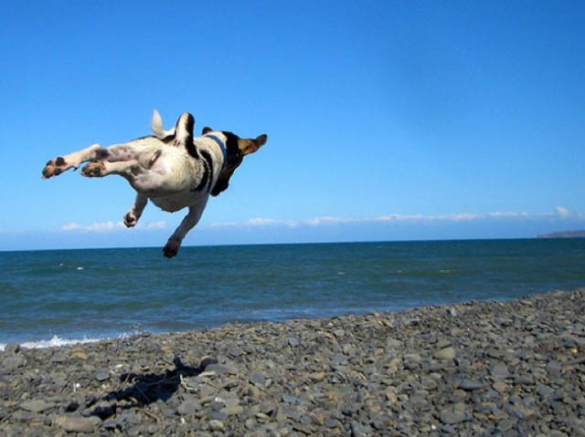 hover dog flying dog 10 The 25 Funniest Hover Animals Ever