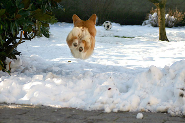 hover dog flying dog 12 The 25 Funniest Hover Animals Ever