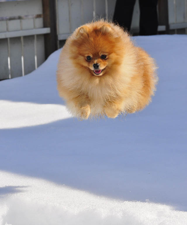 hover dog flying dog 13 The 25 Funniest Hover Animals Ever
