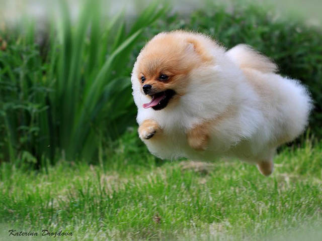 hover dog flying dog 14 The 25 Funniest Hover Animals Ever