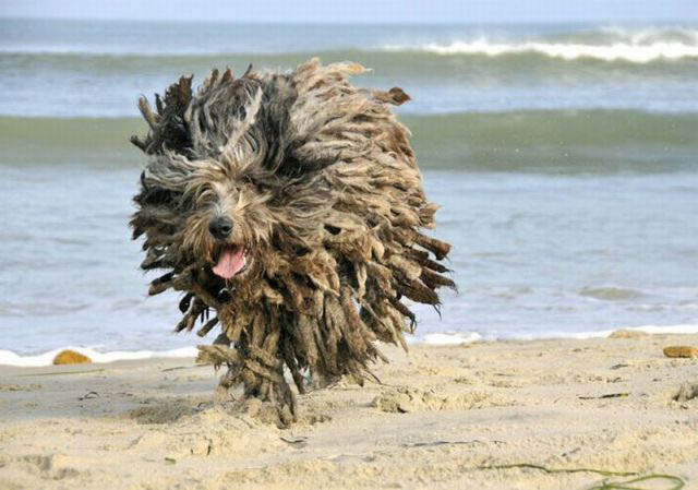 hover dog flying dog 2 The 25 Funniest Hover Animals Ever