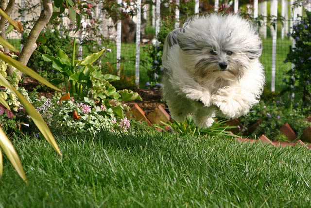 hover dog flying dog 4 The 25 Funniest Hover Animals Ever