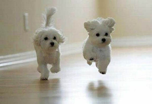 hover dog flying dog 5 The 25 Funniest Hover Animals Ever