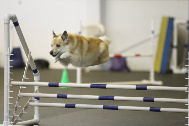 hover dog flying dog 7 The 25 Funniest Hover Animals Ever