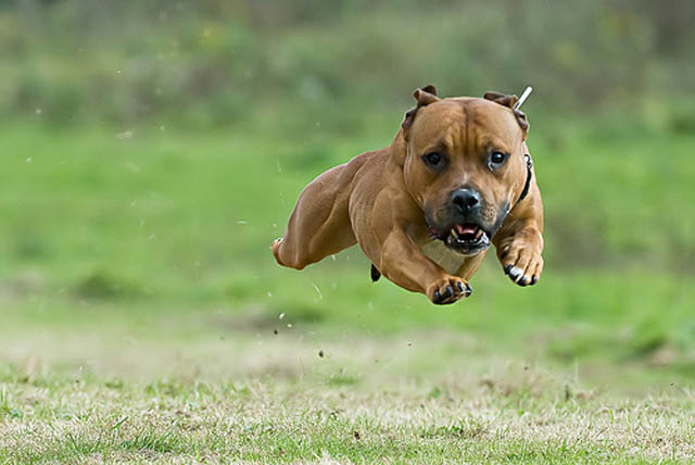 hover dog flying dog 8 The 25 Funniest Hover Animals Ever