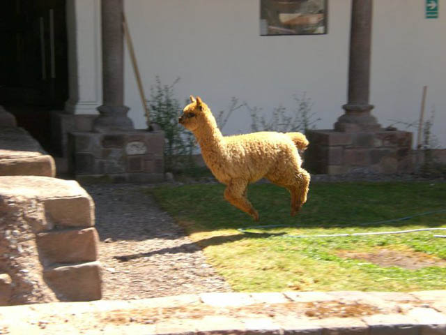 hover llama 2 The 25 Funniest Hover Animals Ever
