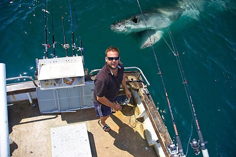 shark photobomb boat animals photobombing The 15 Greatest Animal Photobombs of All Time