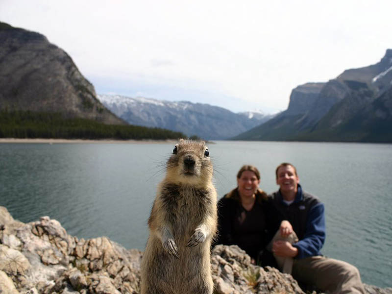 squirrel photobomb banff The 25 Funniest Hover Animals Ever
