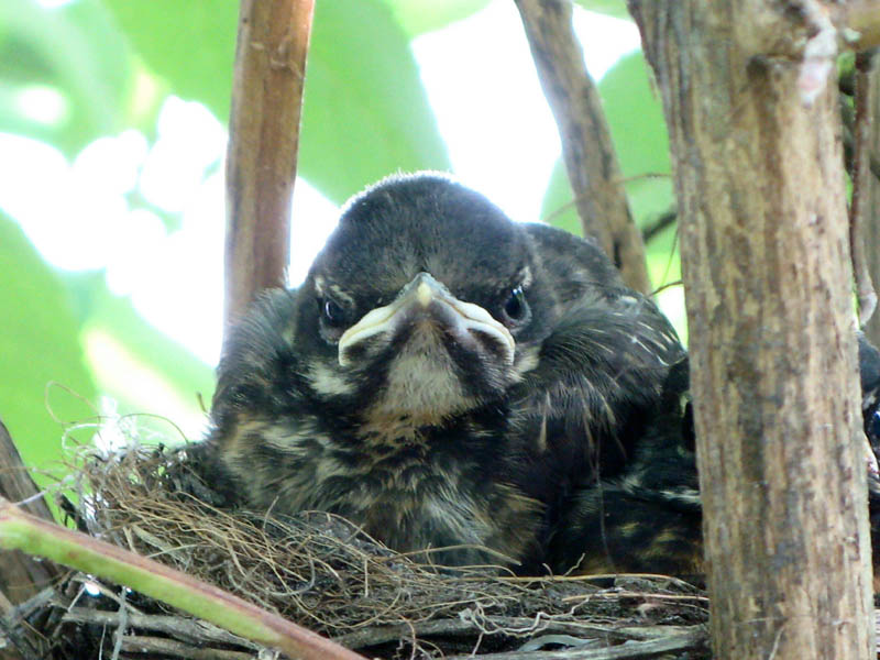actual real life angry looking birds 1 40 Real Life Angry Birds
