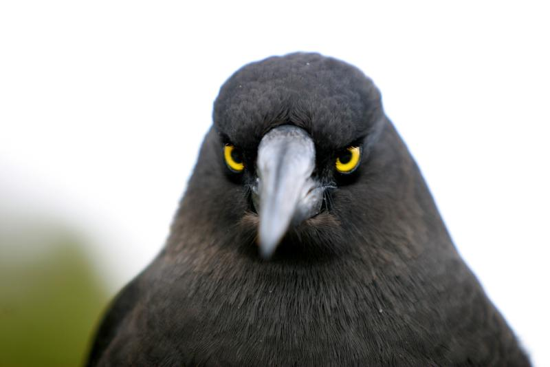 actual real life angry looking birds 3 40 Real Life Angry Birds