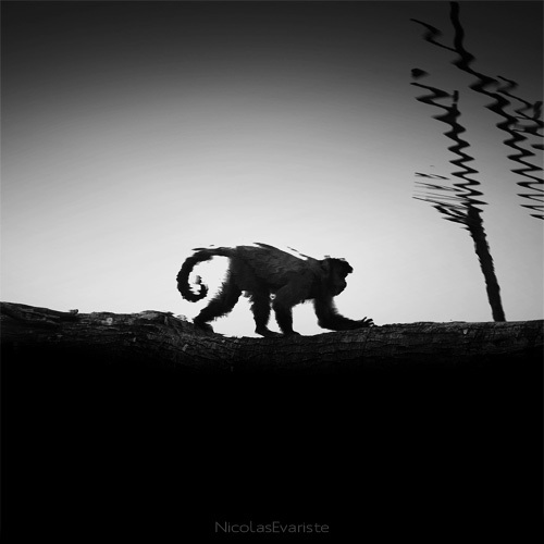 black and white animal portraits square nicolas evariste 11 15 Stunning Black and White Animal Portraits by Nicolas Evariste
