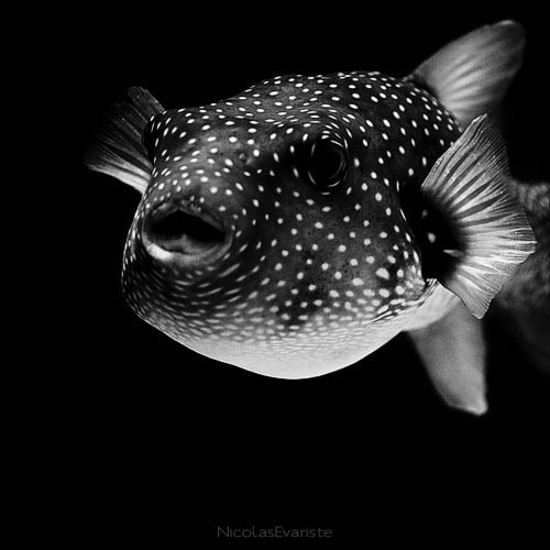 black and white animal portraits square nicolas evariste 3 15 Stunning Black and White Animal Portraits by Nicolas Evariste