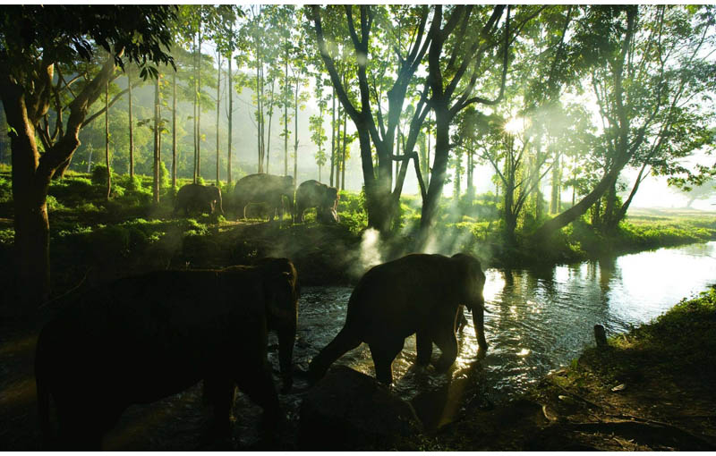 elephant herd parade chiang mai thailand patara elephant farm into sunset Picture of the Day: Elephant Herd in Chiang Mai, Thailand