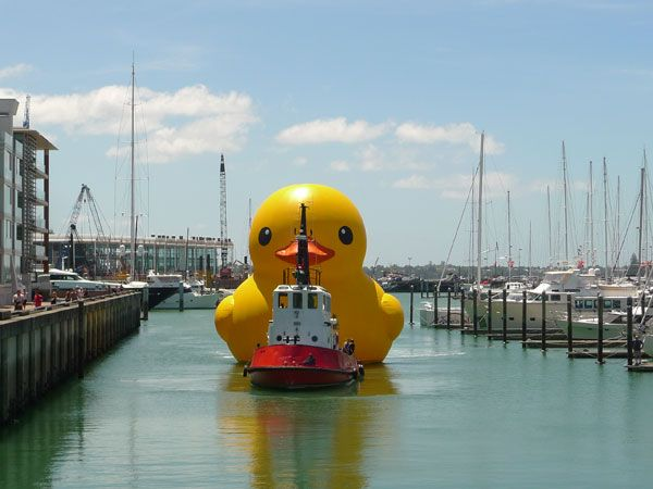 Giant Inflatable Rubber Duck Florentijn Hofman Auckland New Zealand 5 The  World Travels Of A Giant