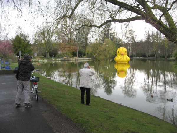 giant inflatable rubber duck florentijn hofman nuremberg germany 3 The World Travels of a Giant Rubber Duck